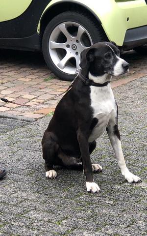 pättchen 2019 hund klein